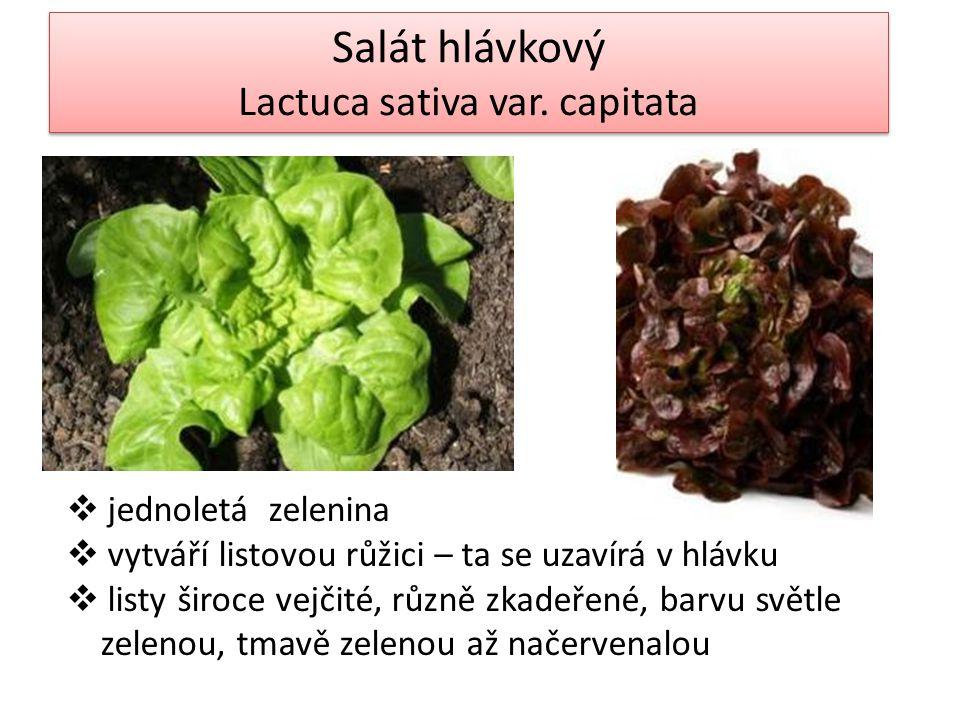 Salát hlávkový Lactuca sativa var. capitata Salát hlávkový Lactuca sativa var.