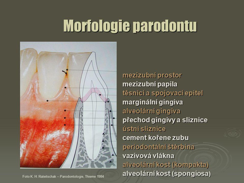 Morfologie parodontu mezizubní prostor mezizubní papila těsnící a spojovací epitel marginální gingiva alveolární gingiva přechod gingivy a sliznice ús