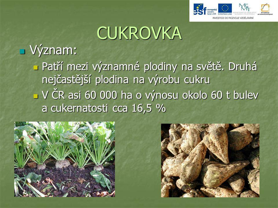CUKROVKA Význam: Význam: Patří mezi významné plodiny na světě. Druhá nejčastější plodina na výrobu cukru Patří mezi významné plodiny na světě. Druhá n