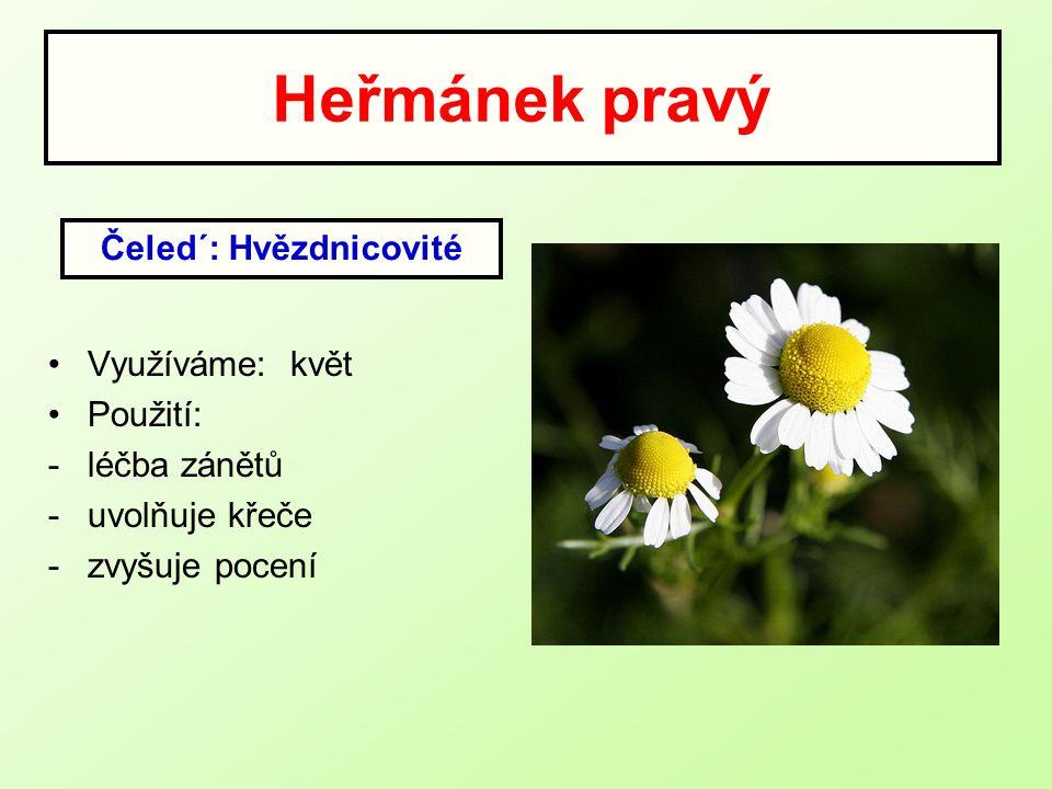 Heřmánek pravý Využíváme: květ Použití: -léčba zánětů -uvolňuje křeče -zvyšuje pocení Čeled´: Hvězdnicovité