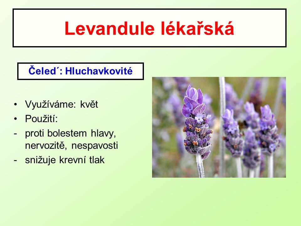 Levandule lékařská Využíváme: květ Použití: -proti bolestem hlavy, nervozitě, nespavosti -snižuje krevní tlak Čeled´: Hluchavkovité