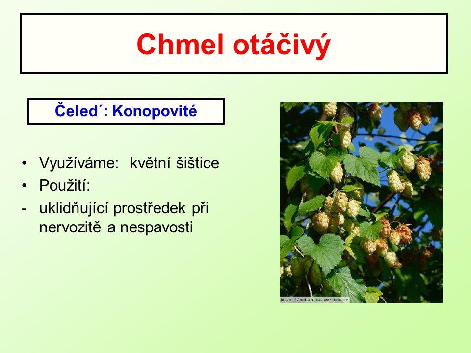 Chmel otáčivý Využíváme: květní šištice Použití: -uklidňující prostředek při nervozitě a nespavosti Čeled´: Konopovité