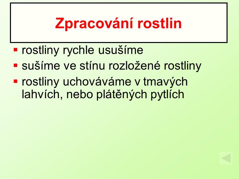 Prvosenka jarní Využíváme: květ Použití: -nemoci ledvin -křeče -revmatismus Čeled´: Prvosenkovité