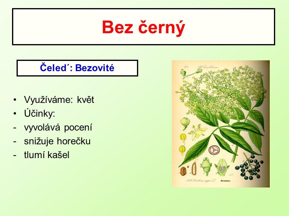 Bez černý Využíváme: květ Účinky: -vyvolává pocení -snižuje horečku -tlumí kašel Čeled´: Bezovité