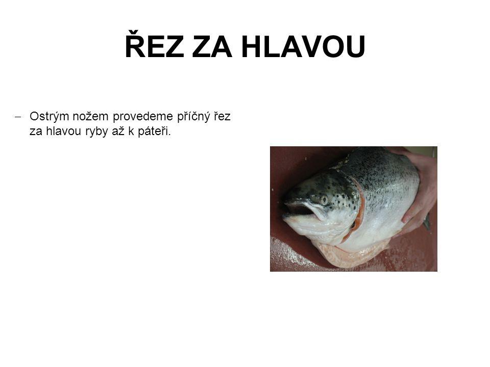ŘEZ ZA HLAVOU  Ostrým nožem provedeme příčný řez za hlavou ryby až k páteři.