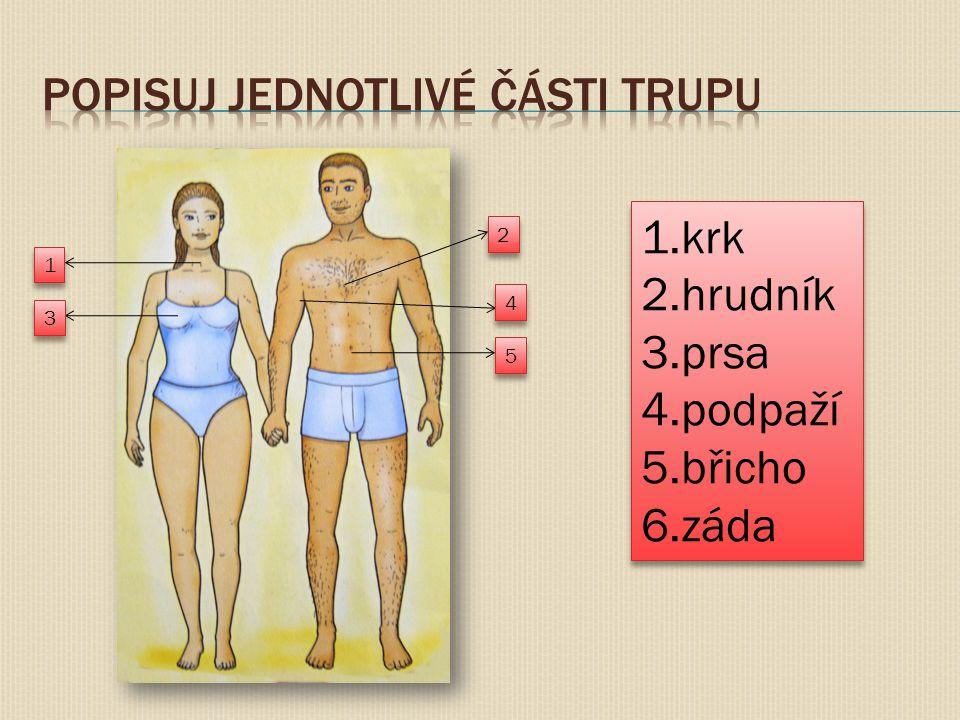 1 1 2 2 3 3 4 4 5 5 1.krk 2.hrudník 3.prsa 4.podpaží 5.břicho 6.záda 1.krk 2.hrudník 3.prsa 4.podpaží 5.břicho 6.záda