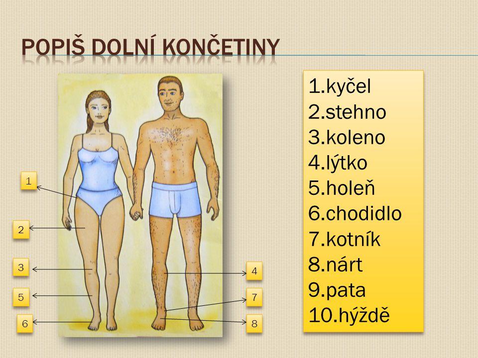1 1 2 2 3 3 4 4 5 5 6 6 7 7 8 8 1.kyčel 2.stehno 3.koleno 4.lýtko 5.holeň 6.chodidlo 7.kotník 8.nárt 9.pata 10.hýždě 1.kyčel 2.stehno 3.koleno 4.lýtko