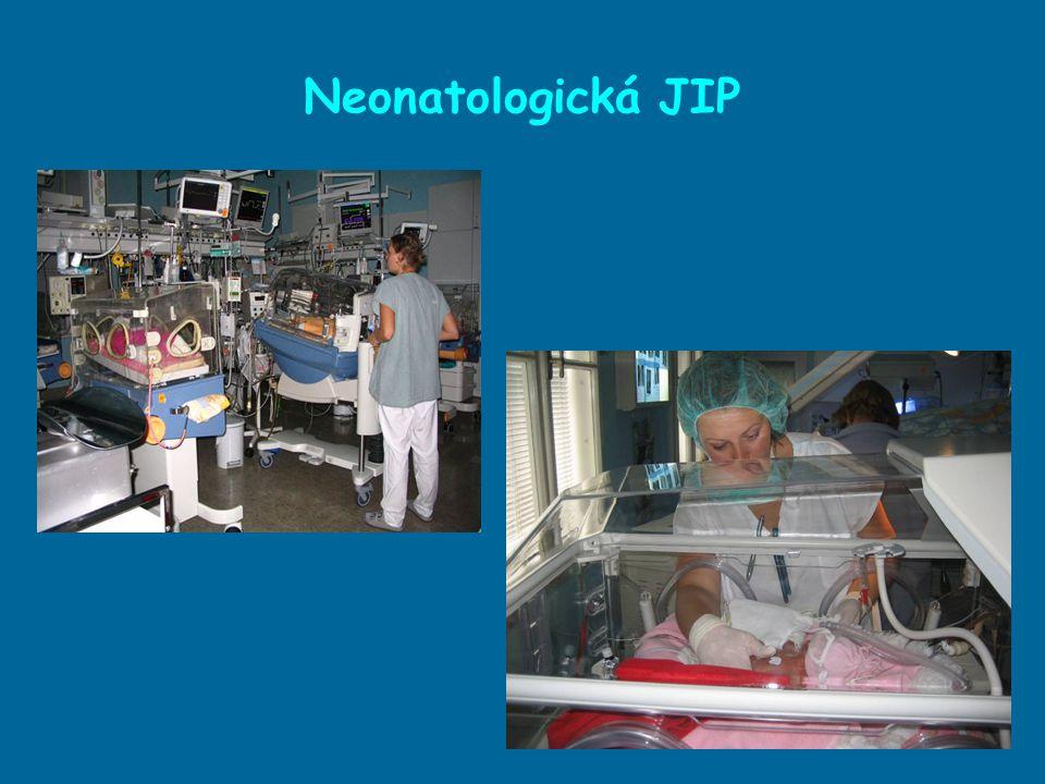 Neonatologická JIP 20(25) intenzivních lůžek, směnný provoz 41 sester Vzdělání sester ■ kvalifikační studium: SZŠ – dětská sestra, Bc., Mgr.