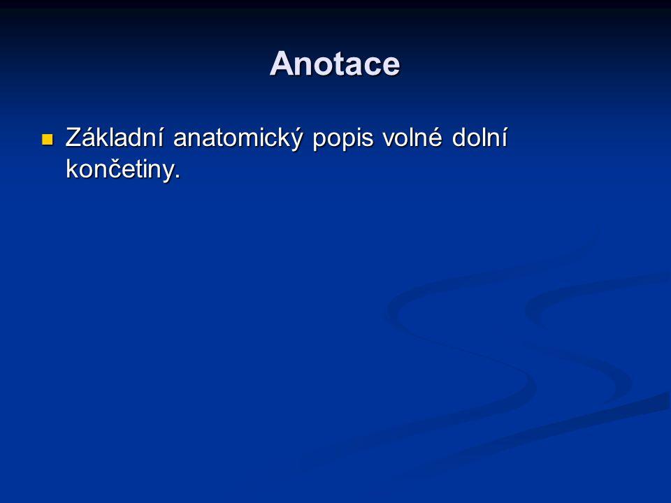 Anotace Základní anatomický popis volné dolní končetiny. Základní anatomický popis volné dolní končetiny.