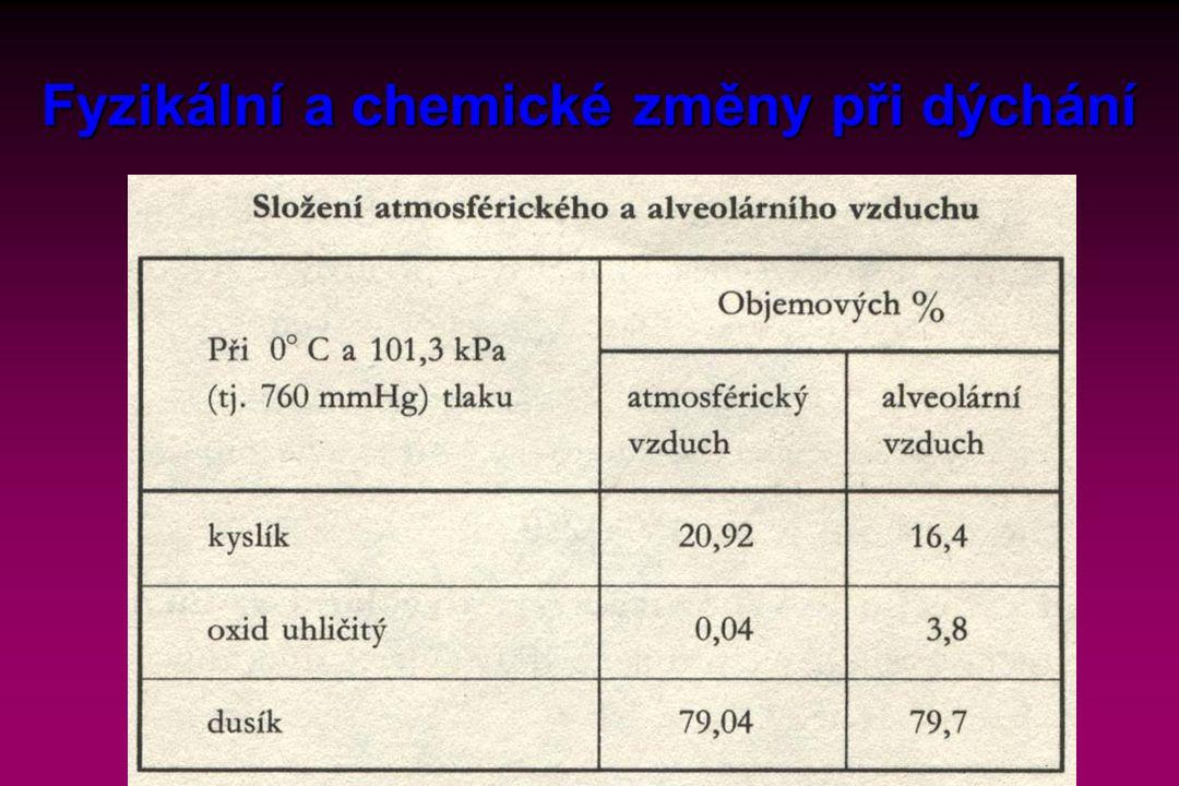 Fyzikální a chemické změny při dýchání
