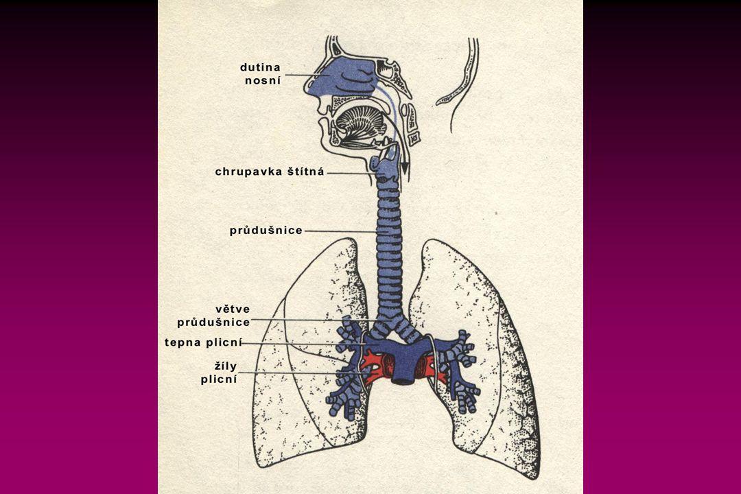 Mechanika dýchání Dýchací pohyby jsou umožněny:  zakřivením žeber,  pohyblivým kloubním spojením obratlů a žeber,  stavbou a uložením dýchacích svalů