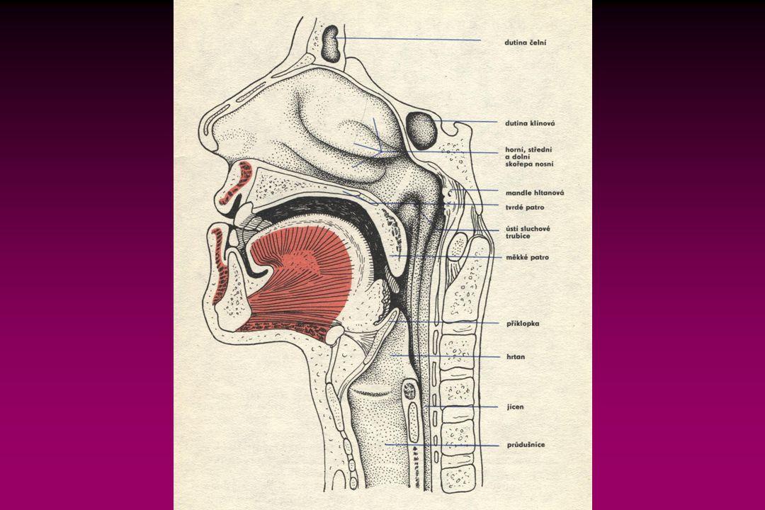 Vydechovaný vzduch nemá stále stejné složení:  Mrtvý dýchací prostor Na počátku je jeho složení téměř stejné jako u vdechovaného, objem je 150-230 ml.