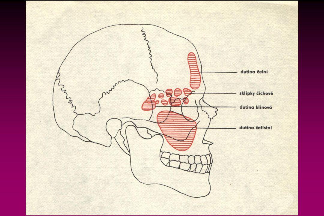 Zevní dýchání Zevní dýchání zajišťují:  Dýchací cesty Dutina nosní, vedlejší dutiny nosní, nosohltan, hrtan, průdušnice, průdušky a průdušinky.