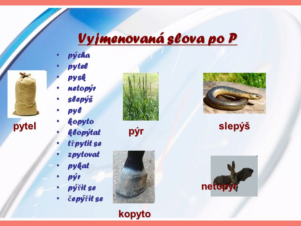 Vyjmenovaná slova po P pýchapýcha pytelpytel pyskpysk netopýrnetopýr slepýšslepýš pylpyl kopytokopyto klopýtatklopýtat t ř pytit set ř pytit se zpytov