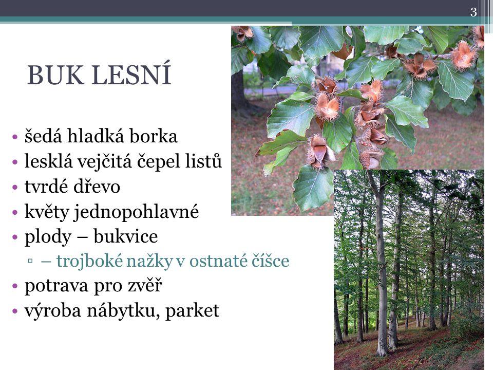 BUK LESNÍ šedá hladká borka lesklá vejčitá čepel listů tvrdé dřevo květy jednopohlavné plody – bukvice ▫– trojboké nažky v ostnaté číšce potrava pro z