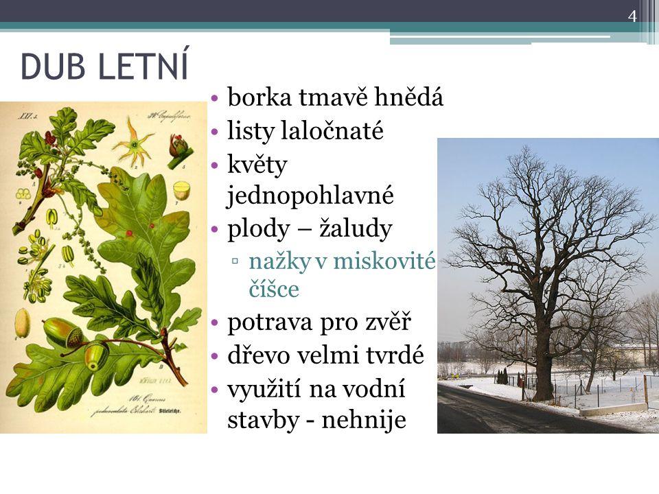 DUB LETNÍ borka tmavě hnědá listy laločnaté květy jednopohlavné plody – žaludy ▫nažky v miskovité číšce potrava pro zvěř dřevo velmi tvrdé využití na