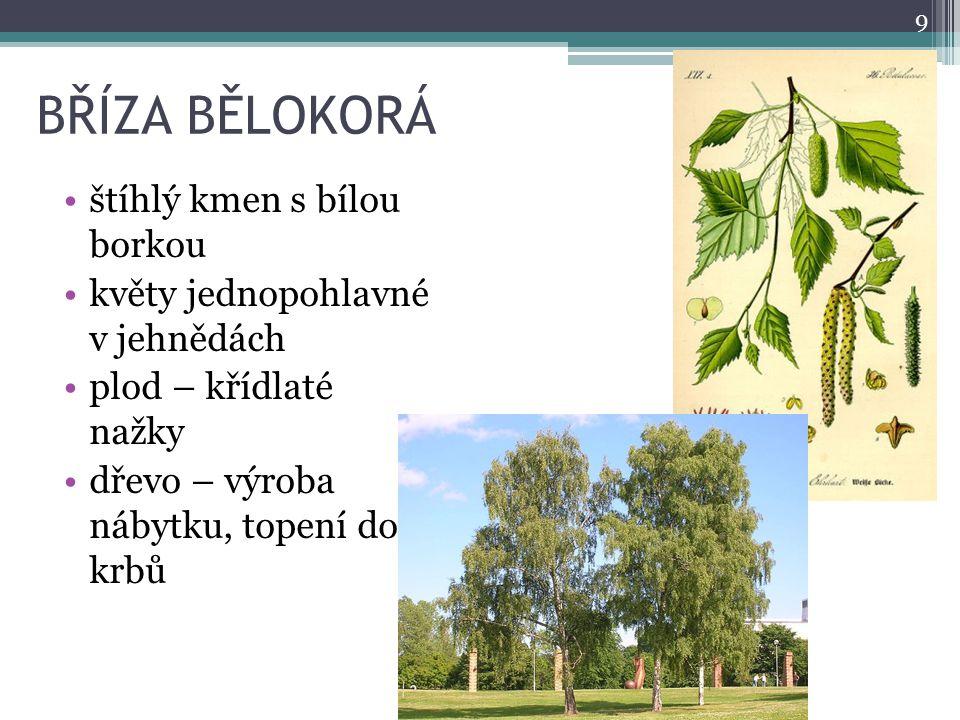 BŘÍZA BĚLOKORÁ štíhlý kmen s bílou borkou květy jednopohlavné v jehnědách plod – křídlaté nažky dřevo – výroba nábytku, topení do krbů 9