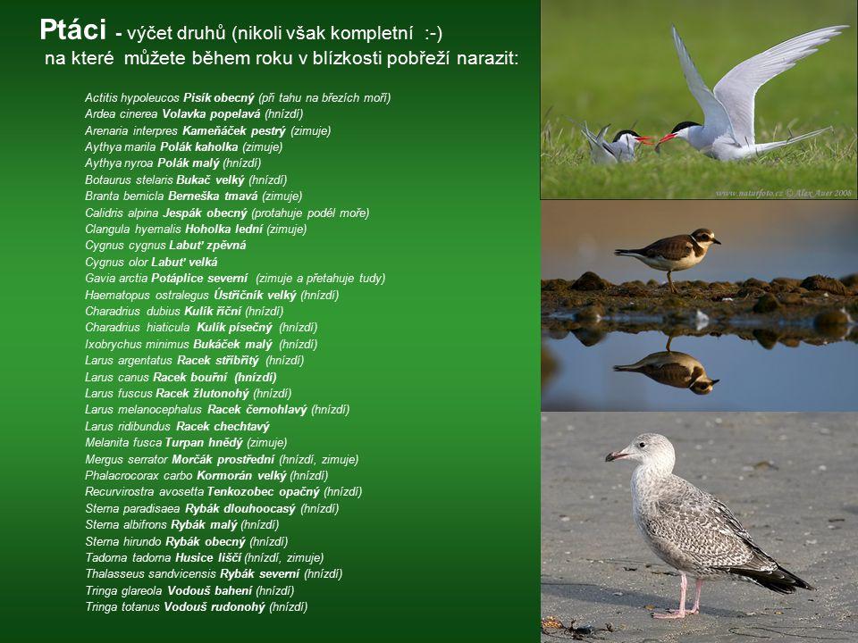 Ptáci - výčet druhů (nikoli však kompletní :-) na které můžete během roku v blízkosti pobřeží narazit: Actitis hypoleucos Pisík obecný (při tahu na bř