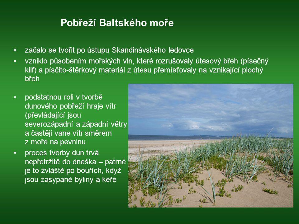 Pobřeží Baltského moře začalo se tvořit po ústupu Skandinávského ledovce vzniklo působením mořských vln, které rozrušovaly útesový břeh (písečný klif)