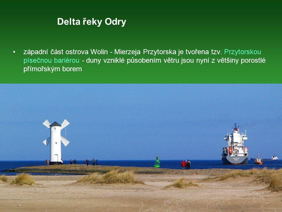Delta řeky Odry západní část ostrova Wolin - Mierzeja Przytorska je tvořena tzv. Przytorskou písečnou bariérou - duny vzniklé působením větru jsou nyn