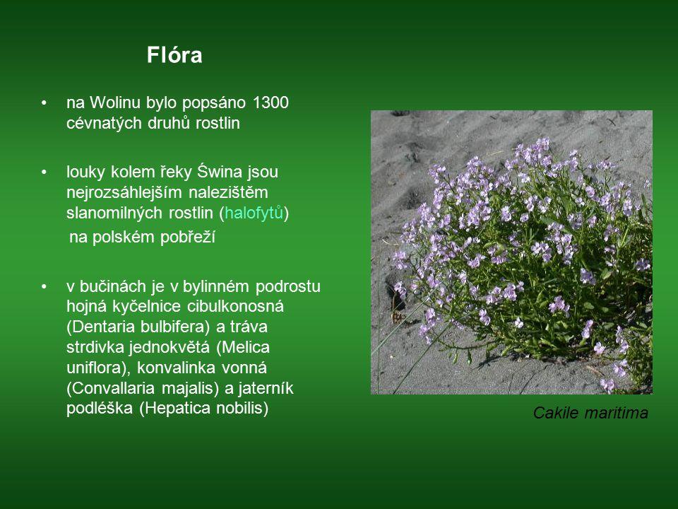Flóra na Wolinu bylo popsáno 1300 cévnatých druhů rostlin louky kolem řeky Świna jsou nejrozsáhlejším nalezištěm slanomilných rostlin (halofytů) na po