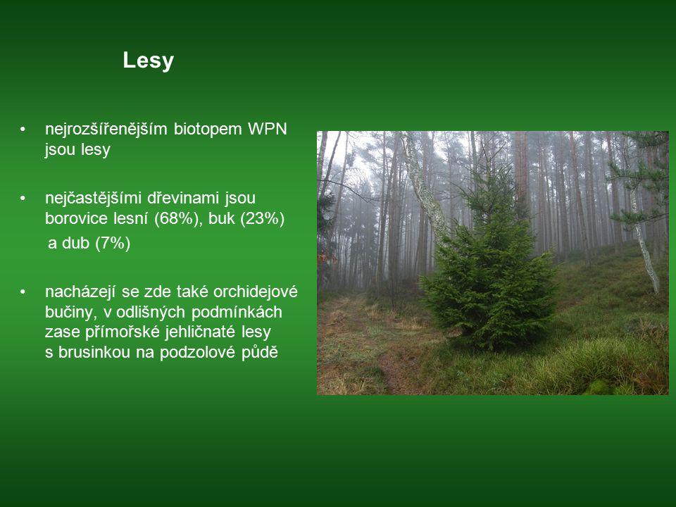 Lesy nejrozšířenějším biotopem WPN jsou lesy nejčastějšími dřevinami jsou borovice lesní (68%), buk (23%) a dub (7%) nacházejí se zde také orchidejové