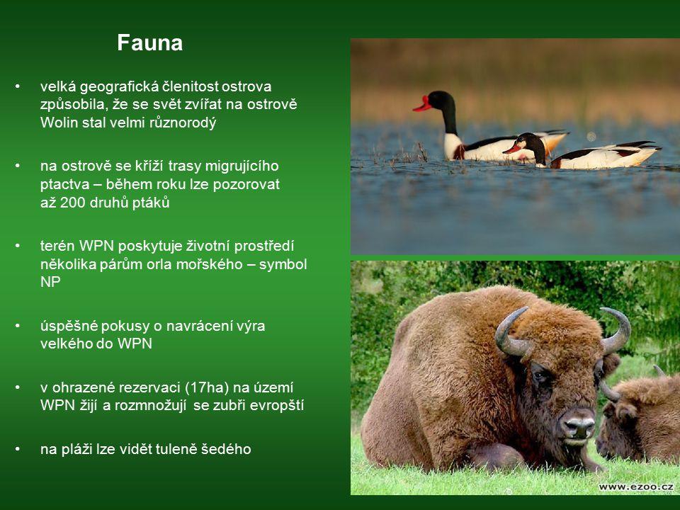 Fauna velká geografická členitost ostrova způsobila, že se svět zvířat na ostrově Wolin stal velmi různorodý na ostrově se kříží trasy migrujícího pta