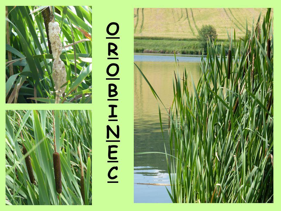 OROBINECOROBINEC