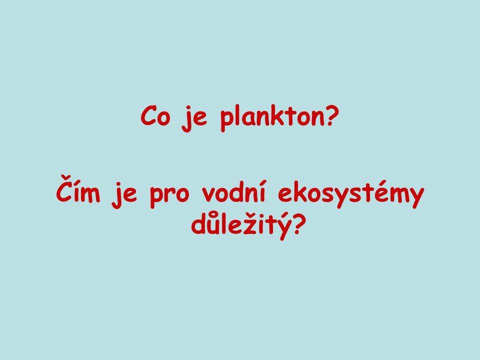 Co je plankton? Čím je pro vodní ekosystémy důležitý?