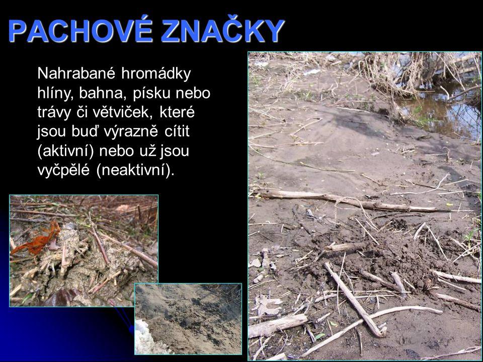 PACHOVÉ ZNAČKY Nahrabané hromádky hlíny, bahna, písku nebo trávy či větviček, které jsou buď výrazně cítit (aktivní) nebo už jsou vyčpělé (neaktivní).