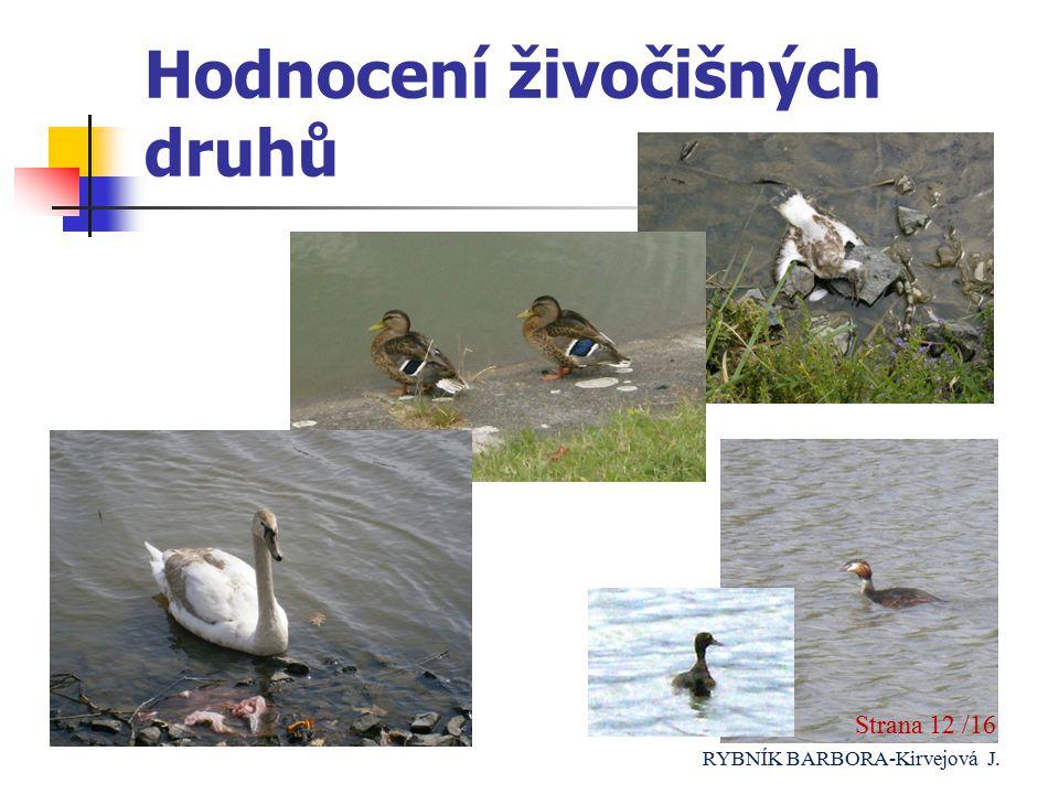 Hodnocení živočišných druhů Strana 12 /16 RYBNÍK BARBORA-Kirvejová J.