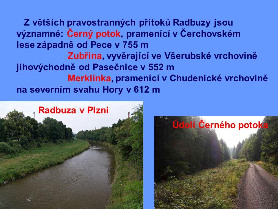 Z větších pravostranných přítoků Radbuzy jsou významné: Černý potok, pramenící v Čerchovském lese západně od Pece v 755 m Zubřina, vyvěrající ve Všerubské vrchovině jihovýchodně od Pasečnice v 552 m Merklínka, pramenící v Chudenické vrchovině na severním svahu Hory v 612 m Radbuza v Plzni Údolí Černého potoka