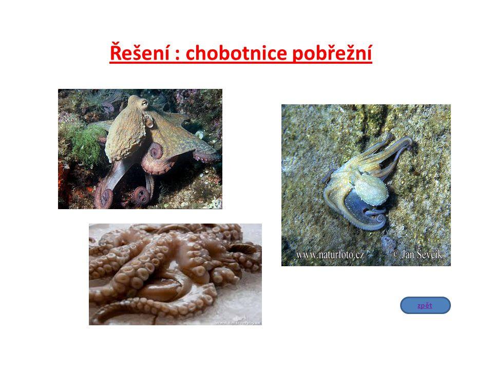 Řešení : chobotnice pobřežní zpět