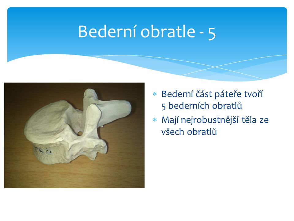 Bederní obratle - 5  Bederní část páteře tvoří 5 bederních obratlů  Mají nejrobustnější těla ze všech obratlů
