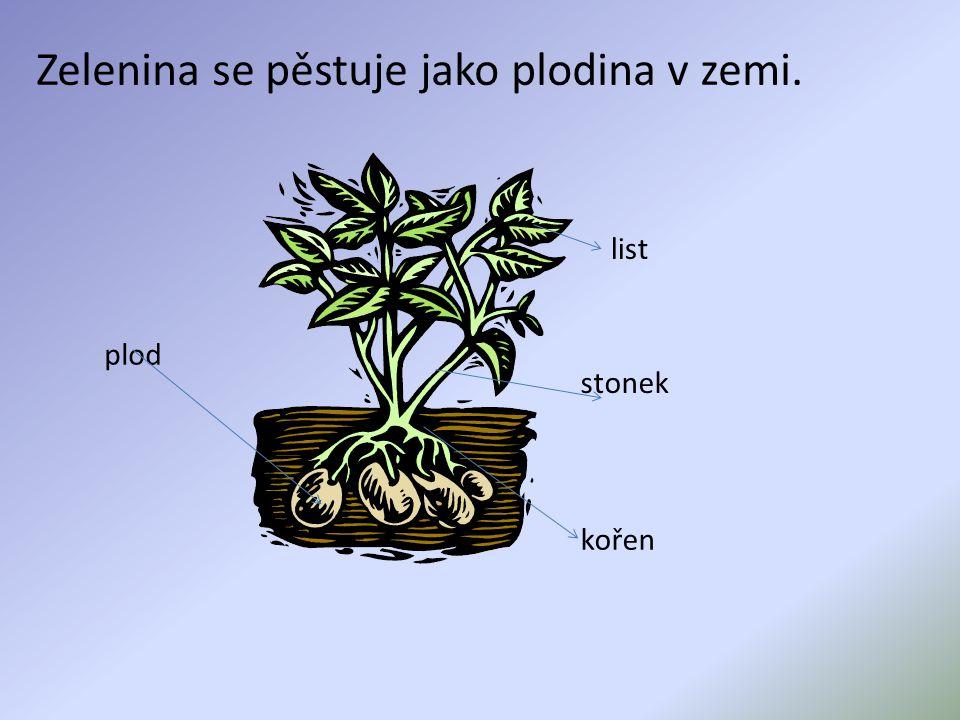 Zelenina se pěstuje jako plodina v zemi. list stonek kořen plod