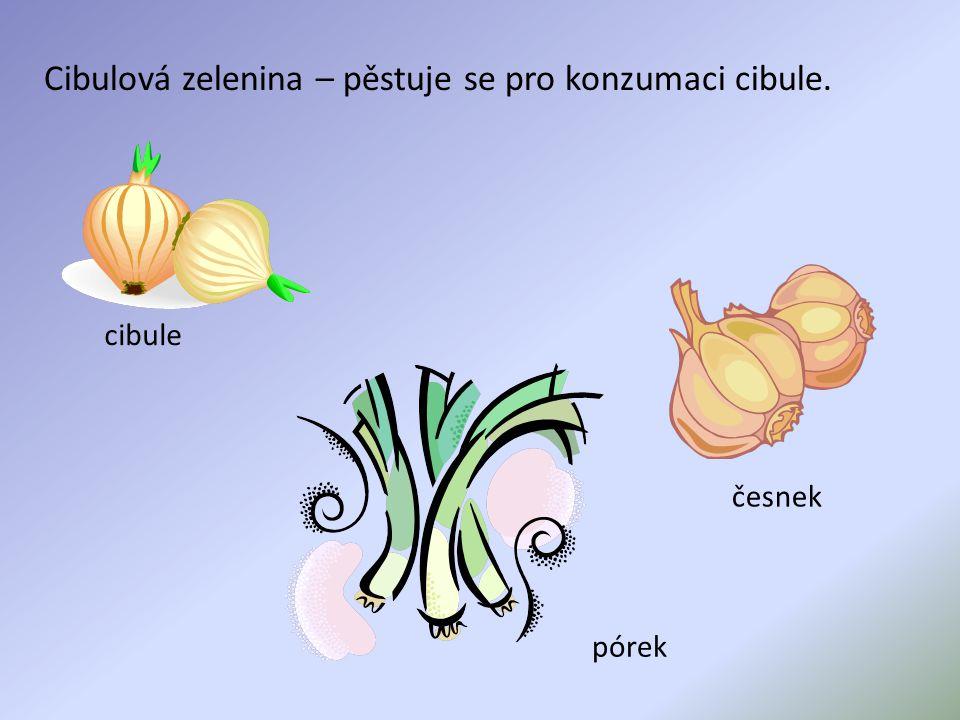 Cibulová zelenina – pěstuje se pro konzumaci cibule. cibule česnek pórek