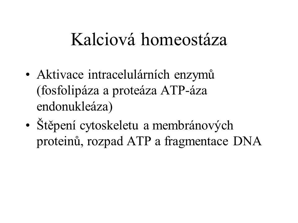 Kalciová homeostáza Aktivace intracelulárních enzymů (fosfolipáza a proteáza ATP-áza endonukleáza) Štěpení cytoskeletu a membránových proteinů, rozpad ATP a fragmentace DNA