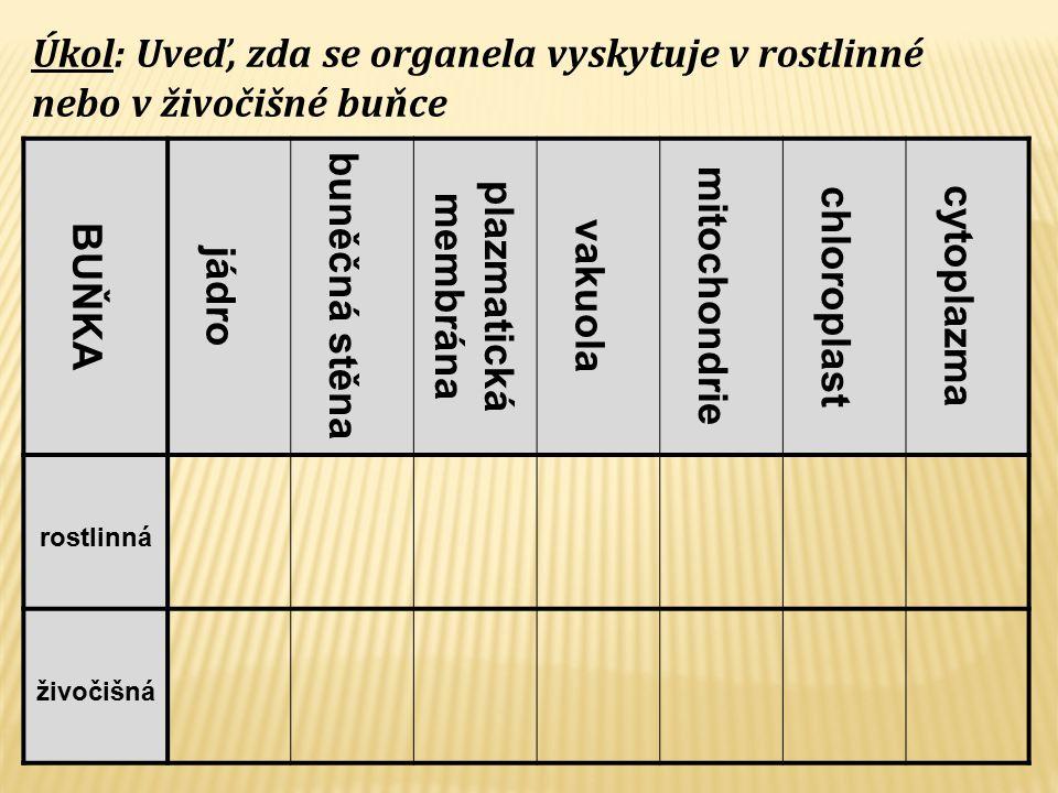 BUŇKA jádro buněčná stěna plazmatická membrána vakuola mitochondrie chloroplast cytoplazma rostlinná živočišná Úkol: Uveď, zda se organela vyskytuje v rostlinné nebo v živočišné buňce