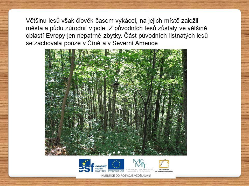 Většinu lesů však člověk časem vykácel, na jejich místě založil města a půdu zúrodnil v pole. Z původních lesů zůstaly ve většině oblastí Evropy jen n