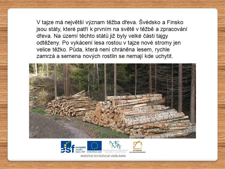 V tajze má největší význam těžba dřeva. Švédsko a Finsko jsou státy, které patří k prvním na světě v těžbě a zpracování dřeva. Na území těchto států j