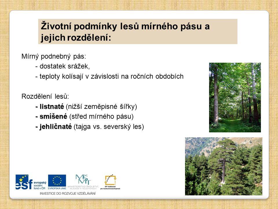 Životní podmínky lesů mírného pásu a jejich rozdělení: Mírný podnebný pás: - dostatek srážek, - teploty kolísají v závislosti na ročních obdobích Rozd