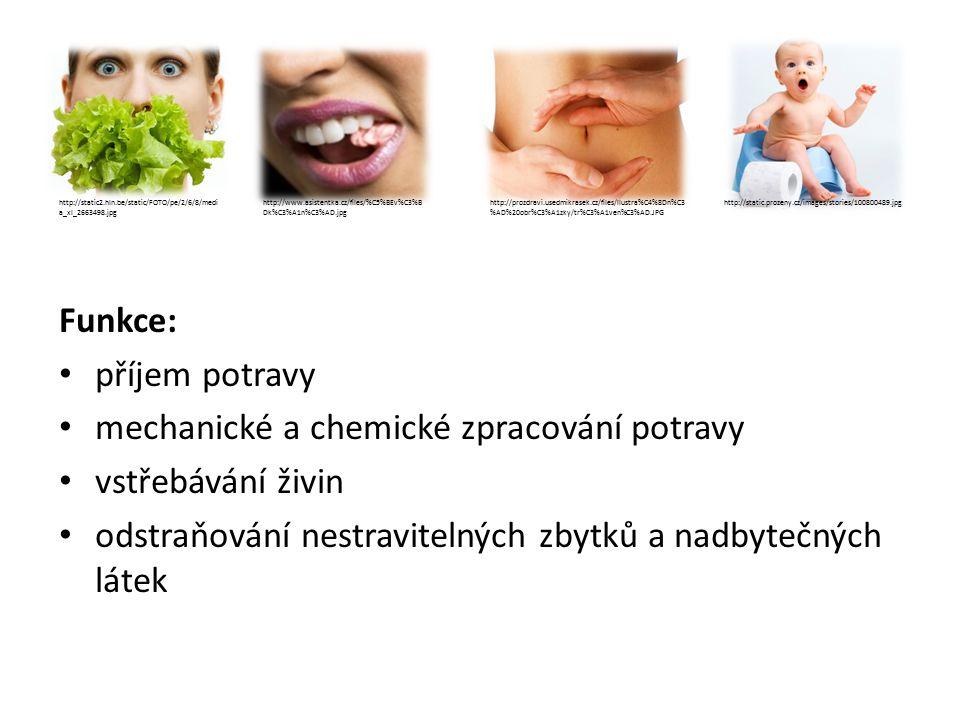 TRÁVICÍ ÚSTROJÍ a)trávicí trubice: -otevřená: otvor ústní X řitní -soustava dutých orgánů: dutina ústní, hltan, jícen, žaludek, tenké a tlusté střevo b)žlázové orgány: - slinné žlázy, slinivka břišní, játra http://upload.wikimedia.org/wikipedia/commons/thumb/7/7c/Digestive_system_di agram_cs.svg/370px-Digestive_system_diagram_cs.svg.png