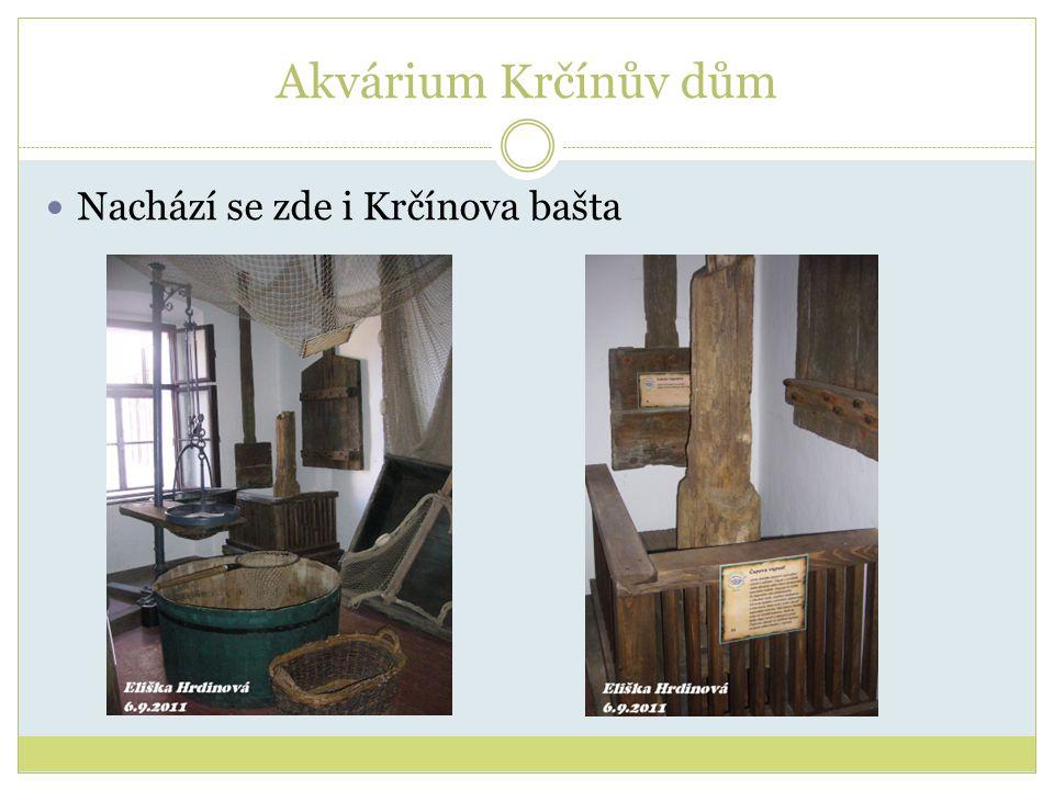 Akvárium Krčínův dům Nachází se zde i Krčínova bašta