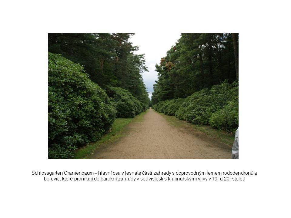 Schlossgarten Oranienbaum – hlavní osa v lesnaté části zahrady s doprovodným lemem rododendronů a borovic, které pronikají do barokní zahrady v souvis