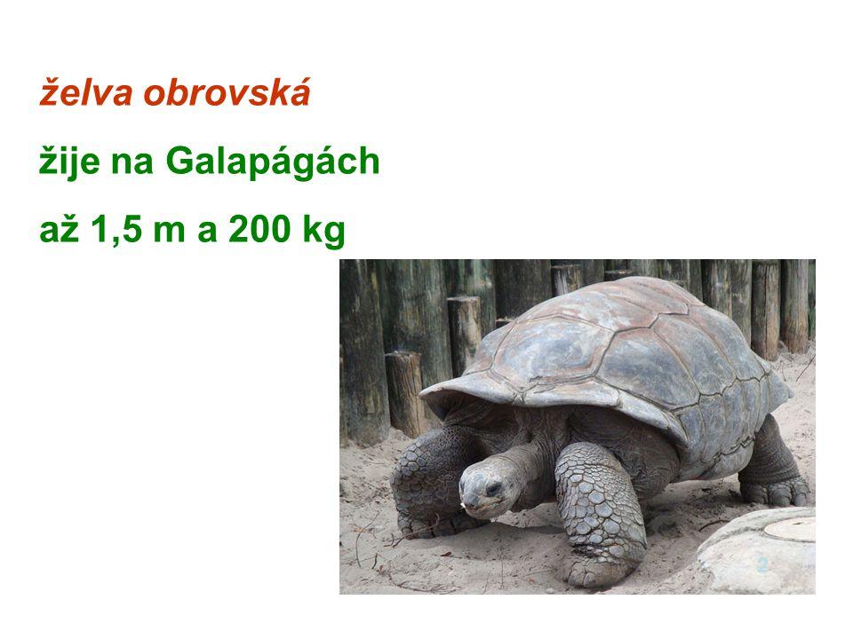 2.vodní želva bahenní žije ve stojatých vodách střední Evropy 3