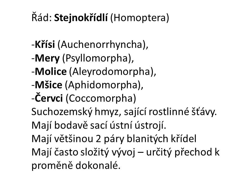 -Křísi (Auchenorrhyncha), -Mery (Psyllomorpha), -Molice (Aleyrodomorpha), -Mšice (Aphidomorpha), -Červci (Coccomorpha) Suchozemský hmyz, sající rostlinné šťávy.