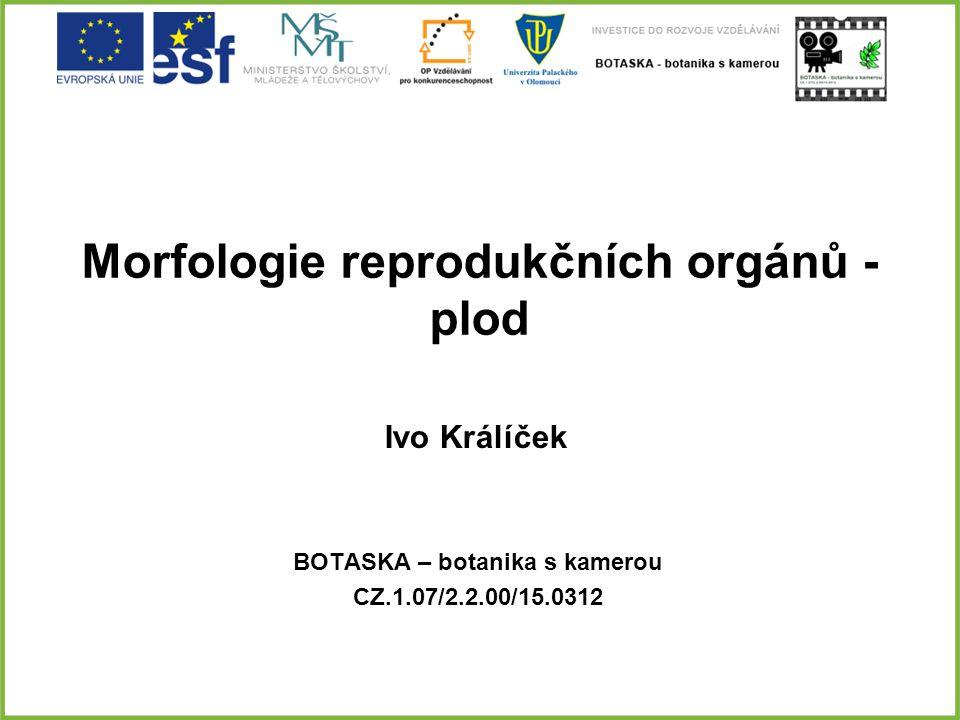 Morfologie reprodukčních orgánů - plod BOTASKA – botanika s kamerou CZ.1.07/2.2.00/15.0312 Ivo Králíček