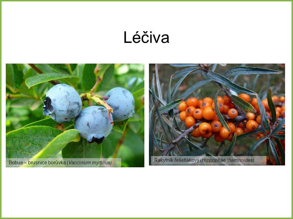 Léčiva Bobue – brusnice borůvka ( Vaccinium myrtillus ) Rakytník řešetlákový ( Hippophae rhamnoides )
