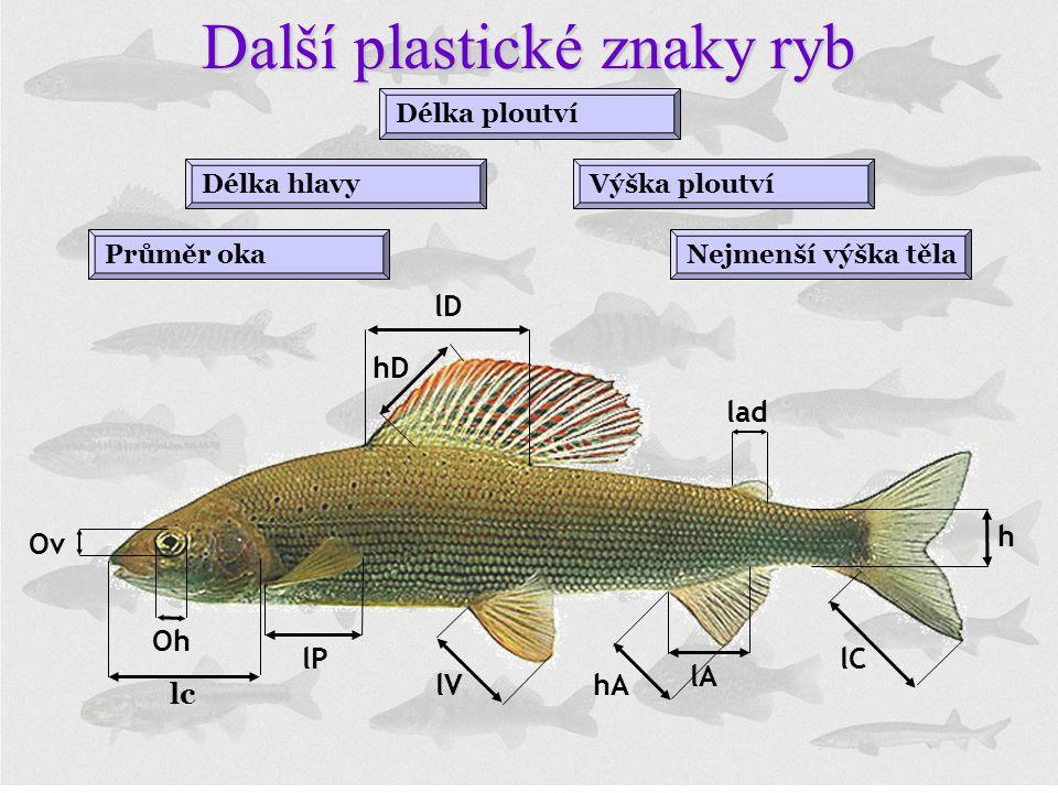 Délka hlavyVýška ploutví Nejmenší výška těla Délka ploutví Průměr oka Další plastické znaky ryb lc lP lV hA lD hD lA lC lad h Oh Ov