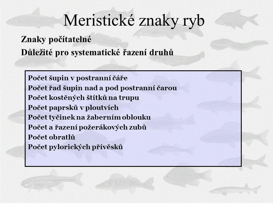Meristické znaky ryb Znaky počítatelné Důležité pro systematické řazení druhů Počet šupin v postranní čáře Počet řad šupin nad a pod postranní čarou P